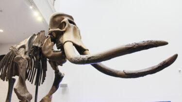 世界初の偉業。ナウマン象の全身骨格化石が発見された幕別町忠類
