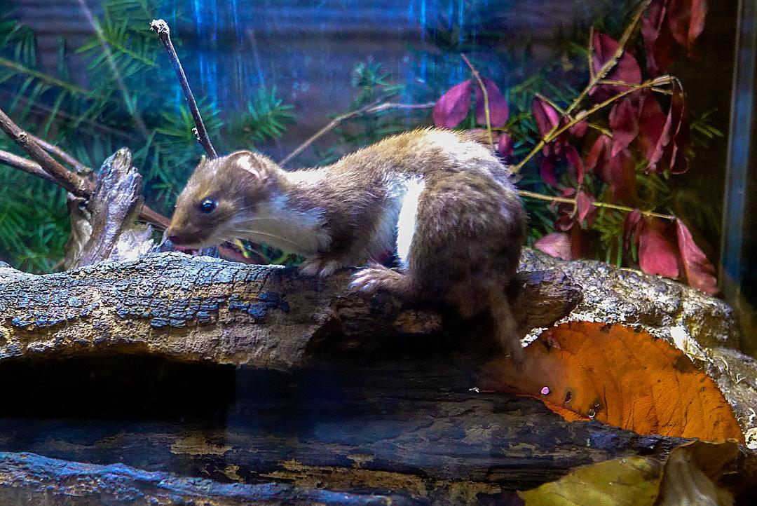 地元に愛されて半世紀―北海道で2番目に誕生した「おびひろ動物園」