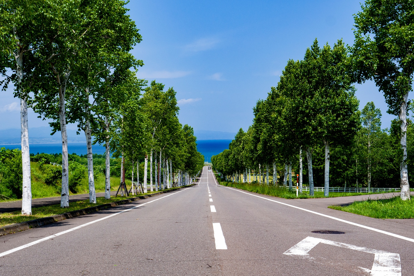 海に向かって1㎞続く白樺並木に感動!八雲町「噴火湾パノラマパーク」
