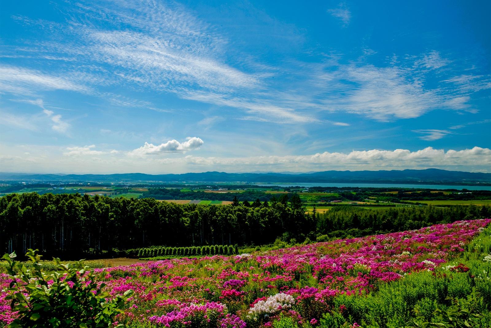 愛らしいピンクの花15万株が丘一面に!「あばしりフロックス公園」