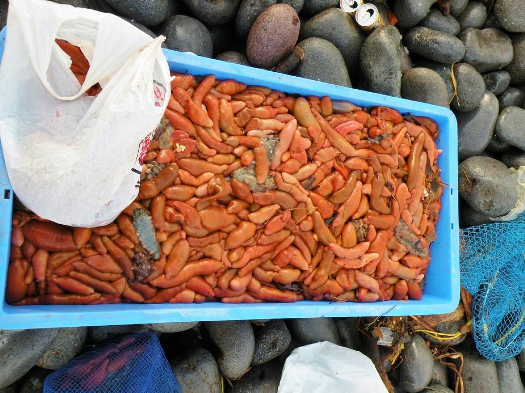 石狩市浜益で愛される「ルッツ」って何?どうやって食べているの?