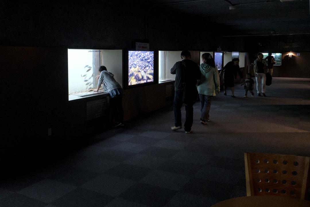 日本最大級の淡水魚水族館ココにあり!サケのふるさと千歳水族館