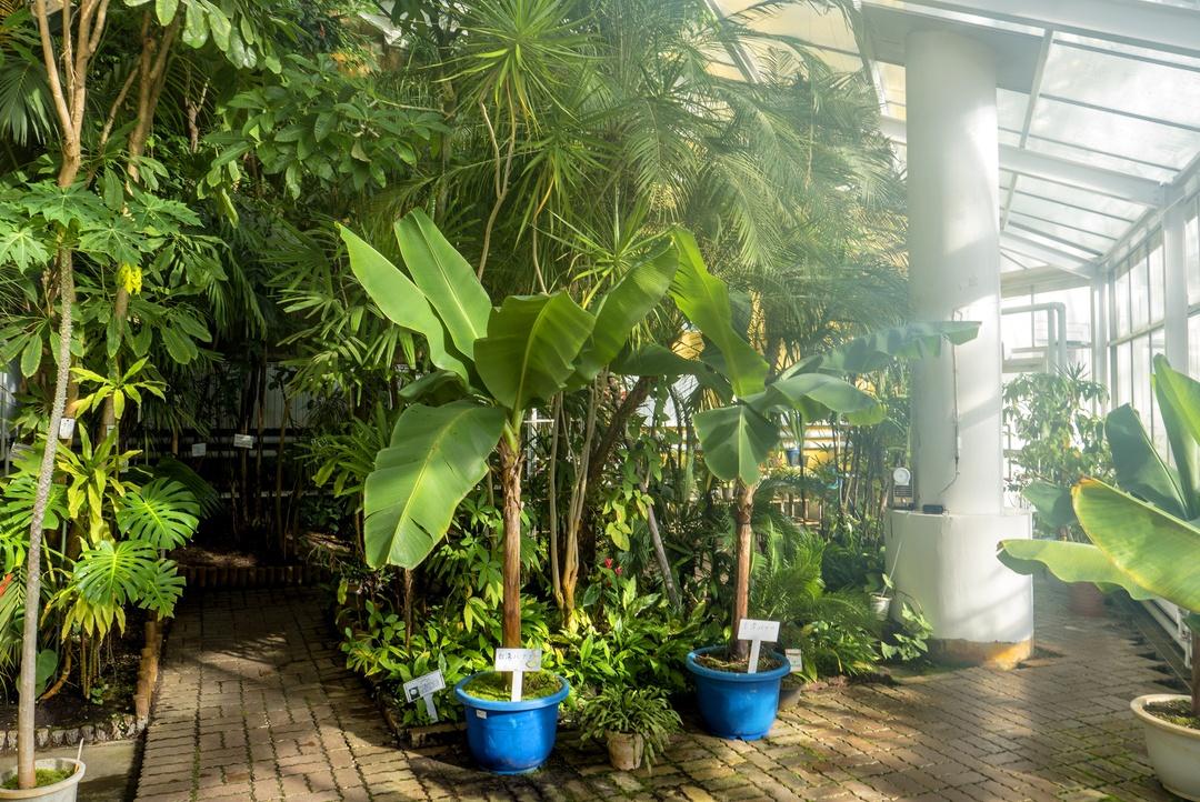 冬でもポカポカ!約80種1400本が茂る室内庭園「苫小牧市サンガーデン」