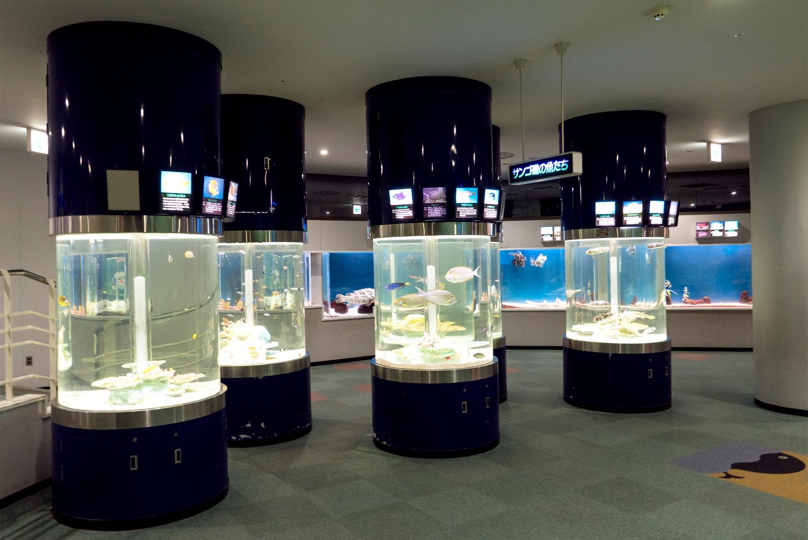 街の中にあるからアクセス良好!新札幌「サンピアザ水族館」の楽しみ方