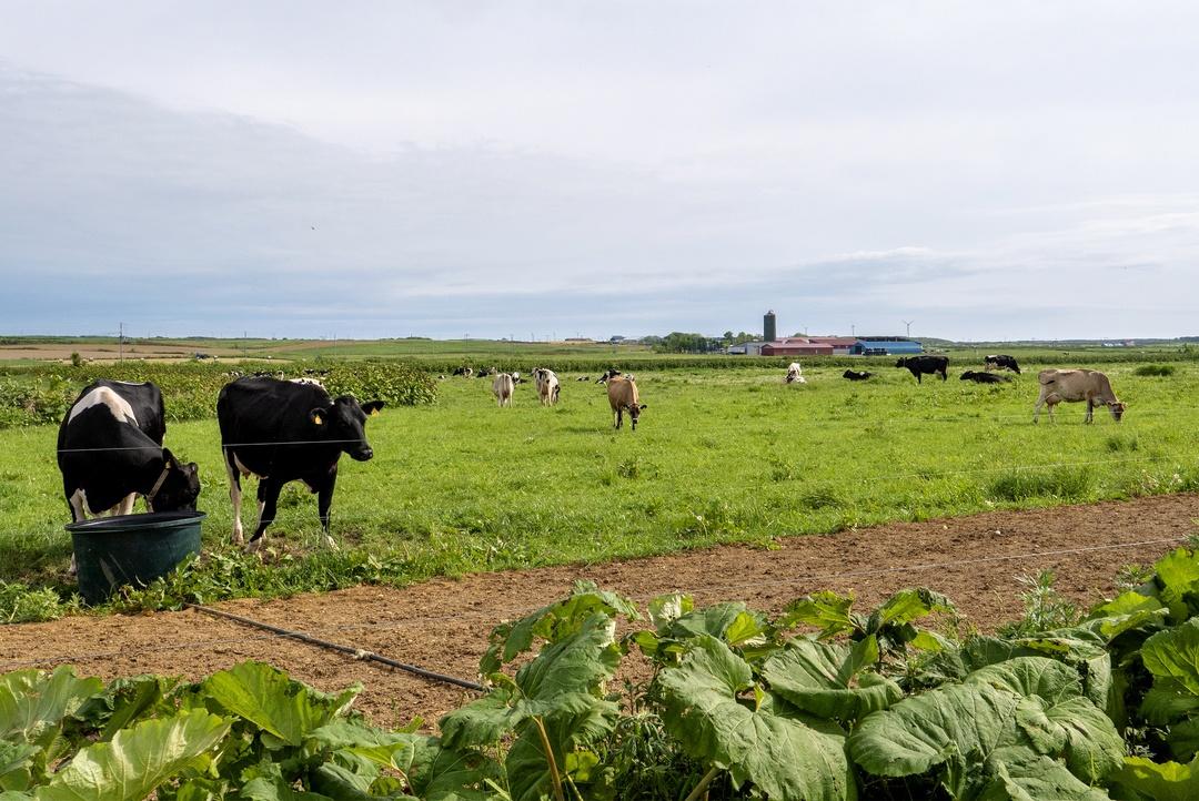 天塩町の牧場が生んだ新食感スイーツ「トロケッテ・ウーノ」とは?