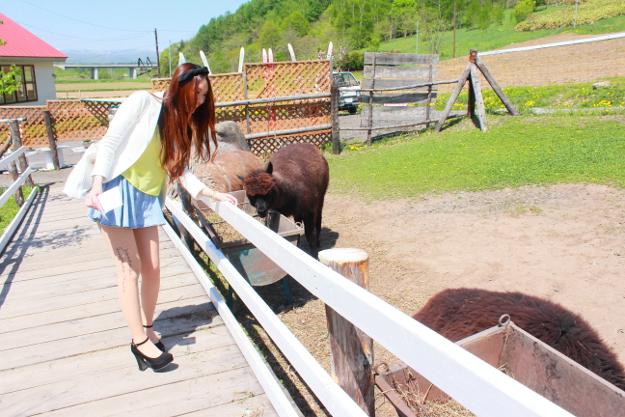 エサやり体験が楽しい! かわいいアルパカと触れ合える「VIVAアルパカ牧場」
