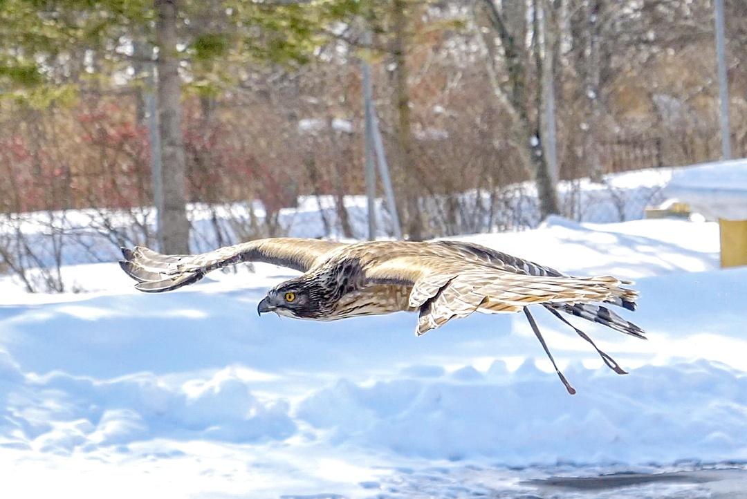ホッキョクグマは冬のほうが美しい。冬の釧路市動物園のすゝめ