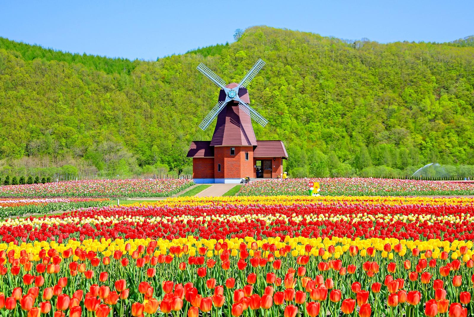 7万㎡に200品種超!熱い思いが作り上げた湧別町のチューリップ公園