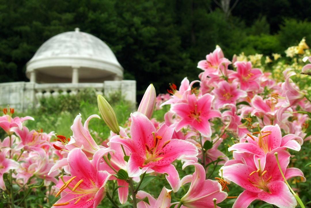 札幌から車で約1時間!由仁町の英国風庭園「ゆにガーデン」の楽しみ方