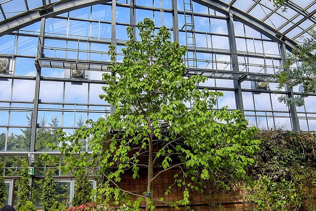 北海道に自生しないツバキも―札幌の温室「百合が原緑のセンター」